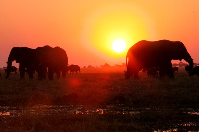 Chobe sunset magic